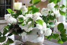Flora.Bouquet  / by Laura Jayne