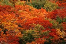 Fall in all her Splendor / Beautiful Fall Scenery- Fall is my favorite time of the year! / by Rod Griffin