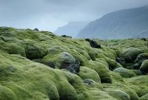 landschappen / by Erna Haenen