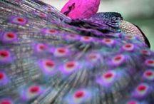 Color / by Dandie Andie Floral Designs