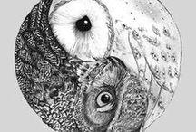 OWLS / ..everything about owls.. / by Sasha Eisenschenk