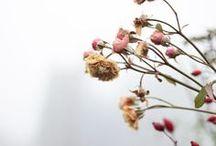 Fleurs / by Léa Nonym