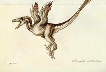 Velociraptors / by ★ MK ★