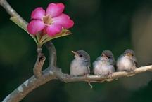Pájaros / by Natividad Gaset Burriel