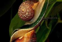 Caracoles. Caracolas. Conchas. / by Natividad Gaset Burriel