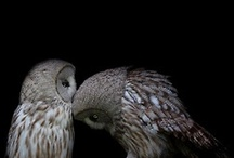 Owls / by Carrie O'Callahan