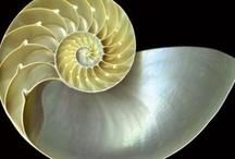 Cabinet de curiosités / by Gradiva Bella