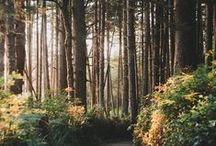 Forest Fantasies / Whimsical woodland wonders. / by Róisín NicLochlainn