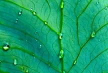 Dew Drops / by Melanie Phillips