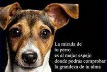 Frases de Animales / by D' perros y mascotas