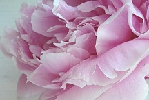 flowers / by Ikuko Yamazaki