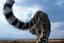 Wildlife / by Africa Exclusive