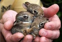Bunnies / by Elayne Forgie