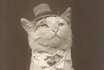 est ce que c'est un chat? / by beatrice flameng