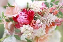 REVEL Pink / by REVEL