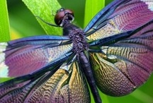 BUTTERFLYS / DRAGONFLYS / INSECTS / by Linda Bloise