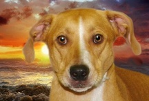 ANIMALS AVAILABLE FOR ADOPTION AND WANT A FOREVER HOME / by Linda Bloise