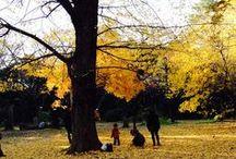 Autumn in Japan / by Tony