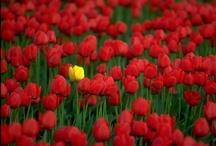 De belles fleurs / by Astrid Tchana