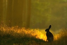 Hares and Rabbits / by Sally Haylock