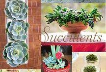 Succulents / by Katrina Soltero