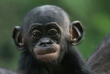 Great Apes & Little Monkeys / by Wendy Dasilva