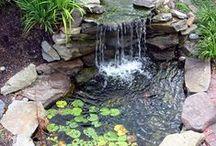 garden / by Tammy Wade-Wheeler