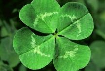Four Leaf Clovers  / by Donna