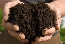 Composting & Healthy Soil / by Love My Books II