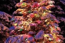 Christmas / by Nancy Carver