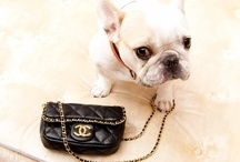 Chanel / by Nancy Carver