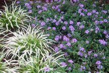 Front garden ideas / by A Pilhorn