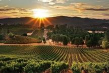 California -- Where I Love Living! / by Nan Barnum