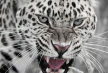 ANIMALS /                       awwwww  / by Tata Araujo