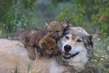 My Wolves / by Annette