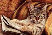 <^@@^> Animals =^••^= / Cute animal board:) / by Chris Yardsale