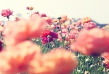 Springtime / Soon. / by Domestic Sluttery
