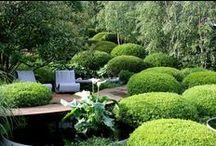 • future garden ideas • / by Claire Chilcott