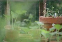 Garden / by Blackbird & Goose