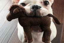 puppy love / by Twila Klense