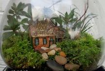 Houseplants & Terrariums / houseplants and making terrariums  / by Bobbie Lawson