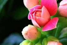 Flores / by estre bl