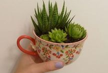 Succulents / by Isabelle