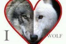 Wolves / by Helen van der Linden