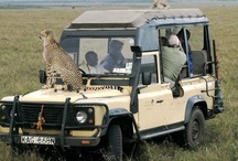 Travel ~ African Safari   / by R J