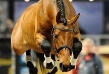 Horses / by Caitlyn Rahe