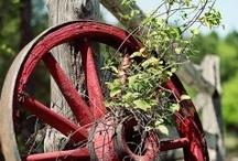 4Rustic Garden / Iron decor and junks  for garden / by Z Rahman