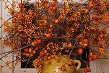 Fall / by Carol Newton