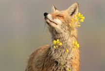 paws up Mr Fox / by Shahri Jarvis