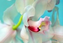 orchids / by Isabela